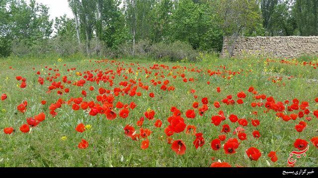 Image result for روستای اکنلو در شهر همدان