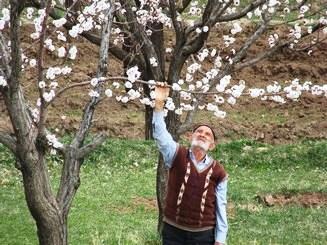 Image result for ?شکوفه های بهاری درختان?